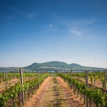 Wine Lover's Luxury Wine Country Tour