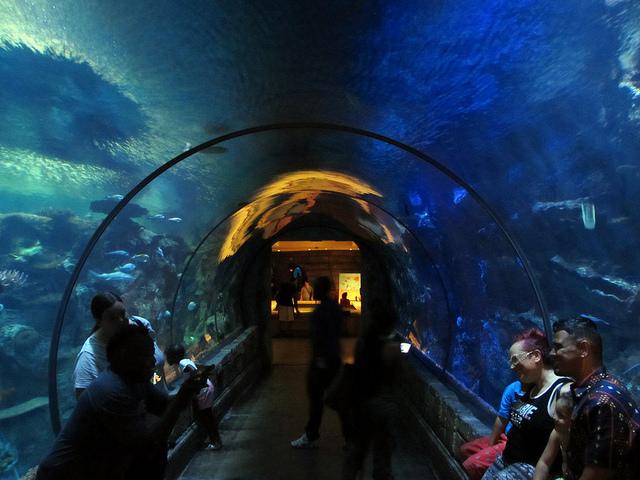Reef Shark Aquarium Las Vegas