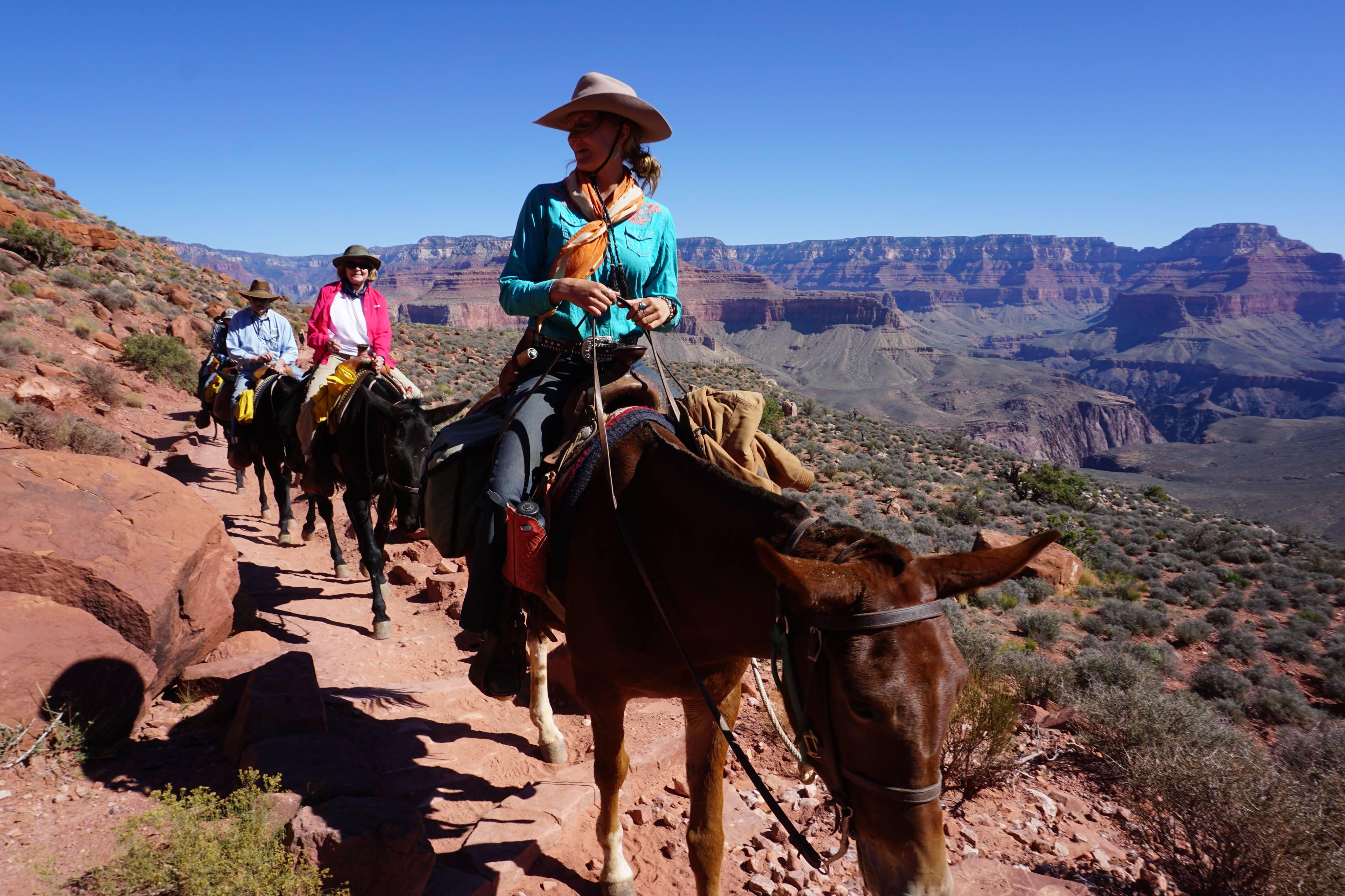 Grand canyon på mulddyr